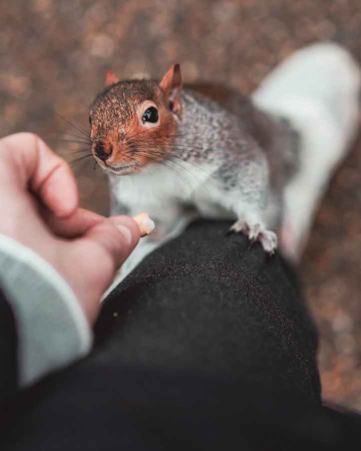 brown head squirrel holding on person on black pants
